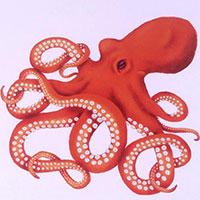Alana-Keenan octopus thumbnail