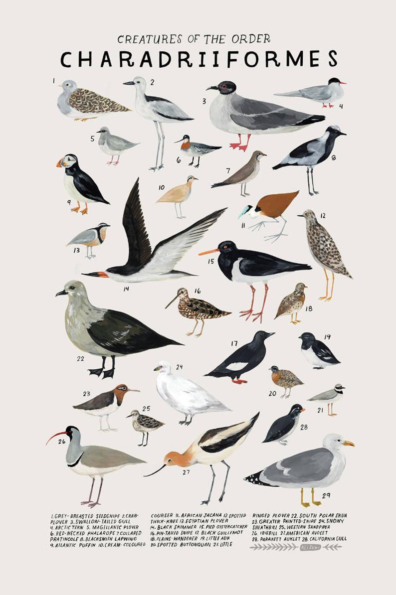 Kelsey Oseid bird print