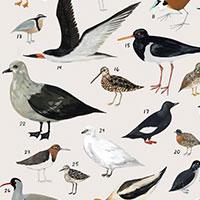 Kelsey Oseid bird thumbnail