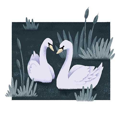 Swans by Gosia Kepka
